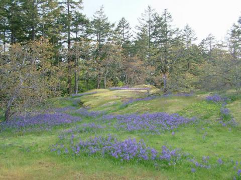 Knockan Hill Park