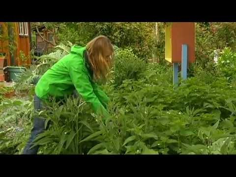 Learning About Organic Seeds - Shaw TV Victoria