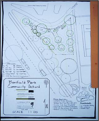 Plans for the layout of the orchard. (Thomas, A. 2013)
