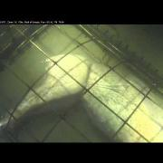 Sixgill shark at Forensic Experiment